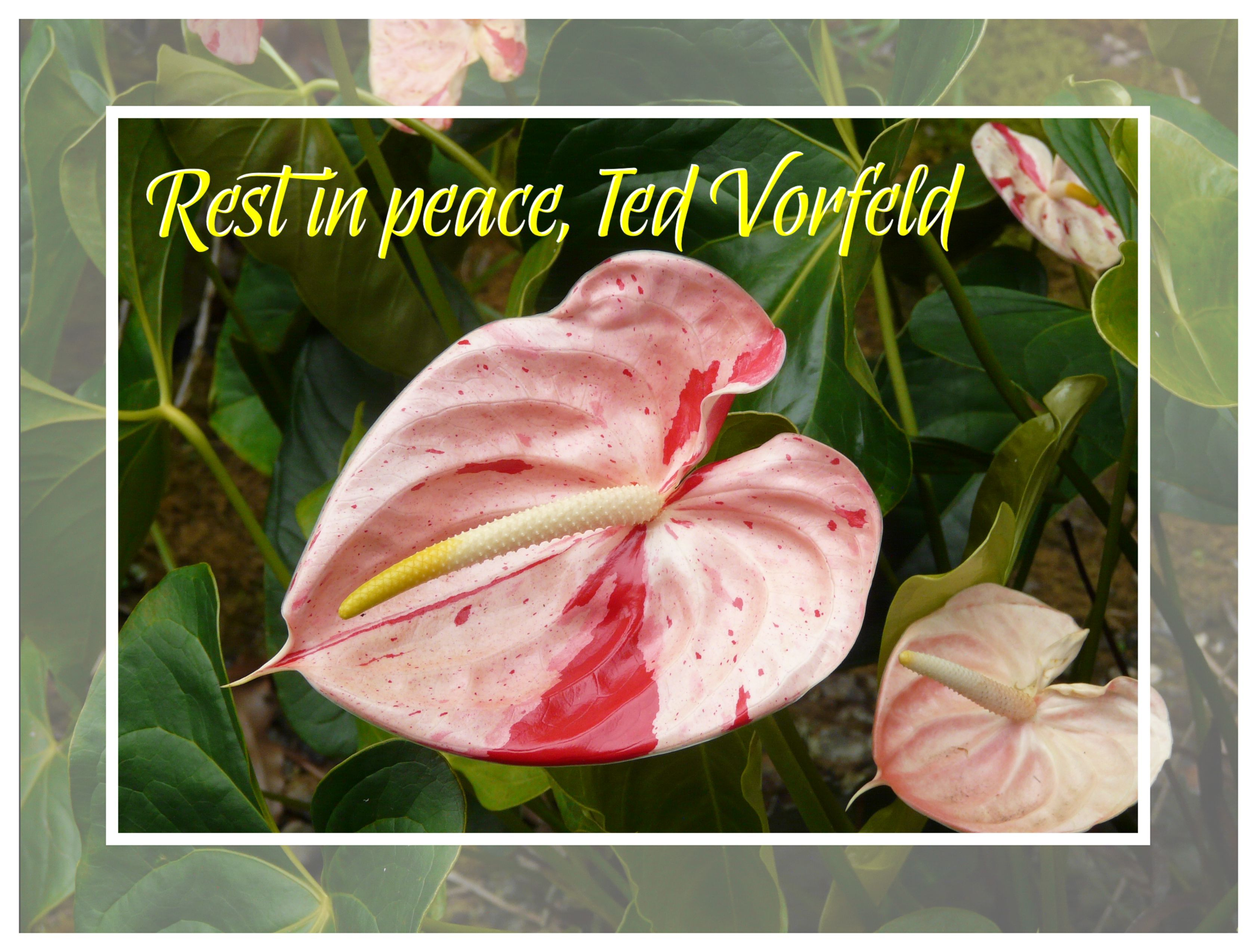 Rest in Peace, Ted Vorfeld